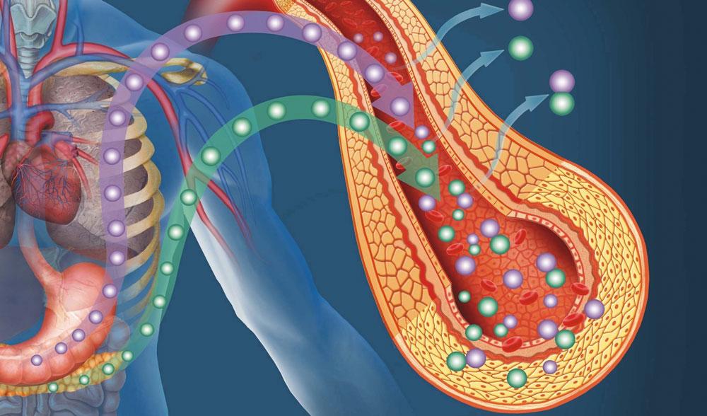 Усвояването на протеина от организма Кири Танев